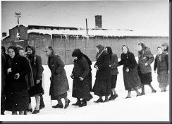 AuschwitzLiberated